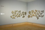 Tracing Time - Installation View by Rachel Cole