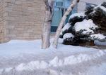 Snow by Zhixuan Lyu